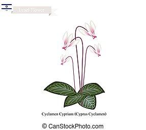 Cyclamen Cyprium, The National Flower of Israel - Israel...
