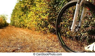cycle montagne, track., forest., piste, motard, vélo, mtb, équitation, homme