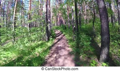 Cycling in a summer forest the first person. Cycling on a footpath in the woods with gopro and sun. Two cyclist mountainbiker during a race in the woods or forest gopro. the Bicycle in the woods