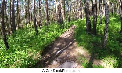 Cycling in a summer forest the first person. Cycling on a footpath in the woods with and sun. Two cyclist mountainbiker during a race in the woods or forest. the Bicycle in the woods
