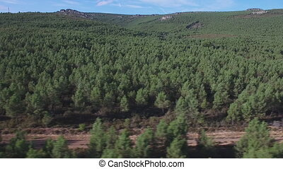 Cycling over isolated track between pine trees - Aerial view...