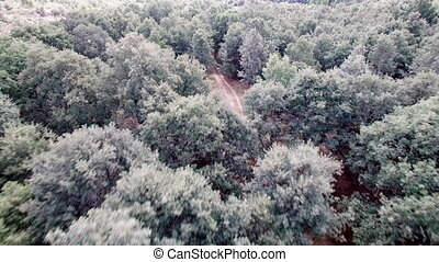 Cycling over oak tree forest - Aerial view of cyclist...