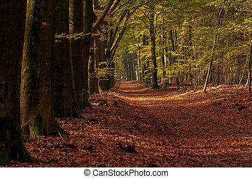 cyclisme, coloré, famille, forêt automne, sentier