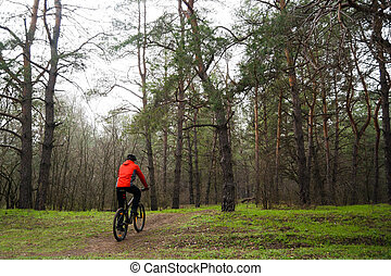 Cyclist Riding Mountain Bike in the Fog on the Trail in the Beautiful Pine Forest. Adventure and Travel Concept.