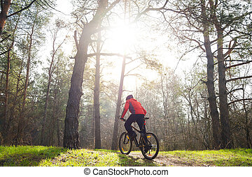 Cyclist Riding Mountain Bike on the Trail in the Beautiful Pine Forest under the Sun. Adventure and Travel Concept.