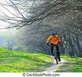 cycliste, équitation, les, vélo, sur, les, piste, dans, les, forêt