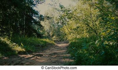 cycliste, promenades, par, forêt