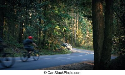 Cyclists Pass Car On Forest Road - Group of cyclists riding...