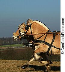 Cyclocross makes spass - cycloross