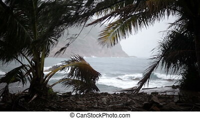 Cyclone, wind,  sea, tropics