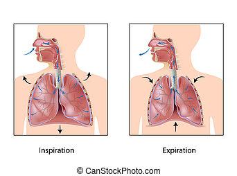 cyclus, van, ademhaling, eps10