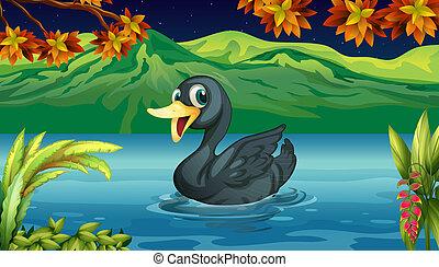 cygne, noir, lac