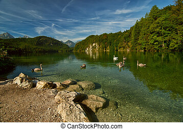 cygnes, montagnes, lac, paysage
