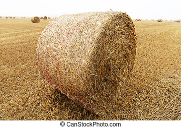cylindrical bales of straw after harvest of cereals, close-up on a foggy morning