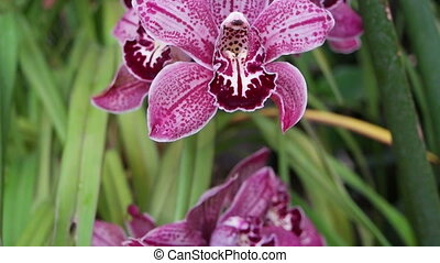 Cymbidium orchid gainst tropical greens