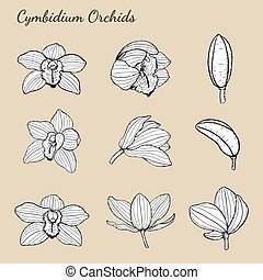 Cymbidium Orchids by hand drawing.