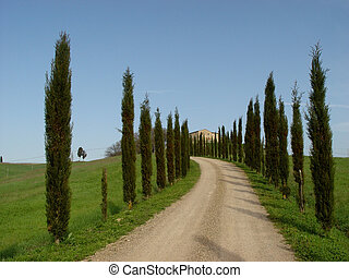 cypress alley - road leading to a house in tuscany, italy