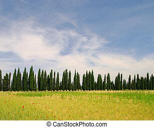 cypress avenue 02