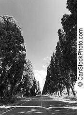 Cypress avenue of Saint Guido, Bolgheri Tuscan IT- November ...
