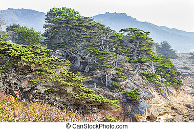 Cypress Coastal Scrub at Point Lobos