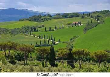 cypress curve