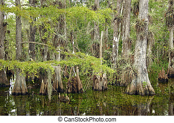 Cypress Forest, Everglades National Park - A typical cypress...