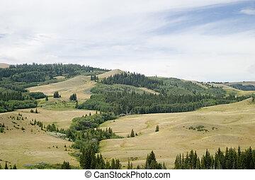 Cypress Hills provincial park, Saskatchewan, Canada
