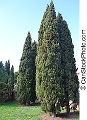 Cypress in the park
