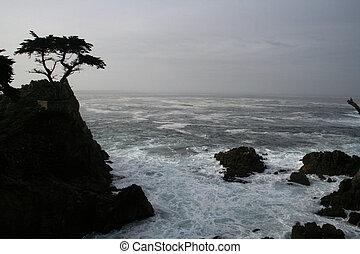 cypress - Lone Cypress at dawn