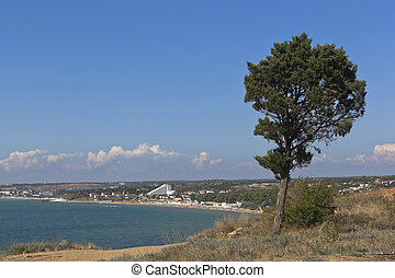 Cypress on the steep bank of Cape Tolstoy on the Crimean peninsula, Russia