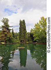 Cypress reflected in a pond