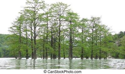 Cypress swamp water spring