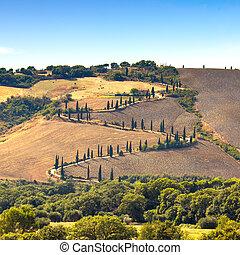 Cypress tree scenic road in Pienza near Siena, Tuscany,...