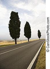 Cypress trees along road.
