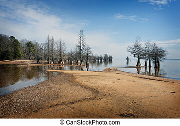 Cypress trees at Lake Marion, South Carolina