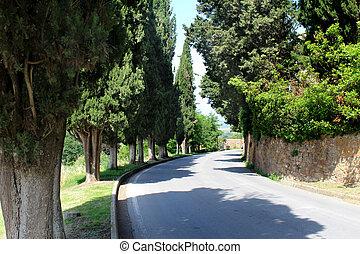 Cypress Trees around Pienza Italy - Mediterranean Cypress ...