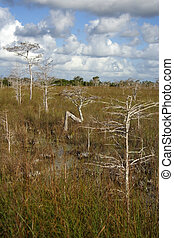 Cypress trees in the Glades, Everglades National Park