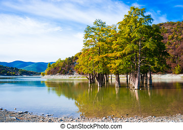Cypress trees grow in the lake water on an autumn day.