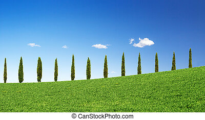 cypress trees in a row on a green hill