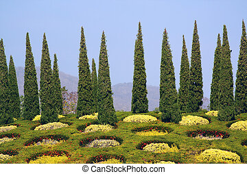 Cypress trees and flower beds in botanical garden