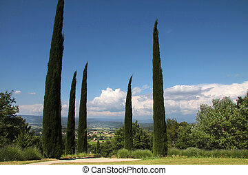 Cypress trees in the park at Oppede-le-Vieux in Southern France