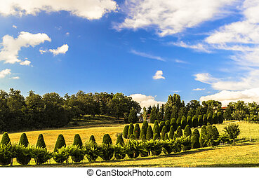 Cypress trees in Tuscany
