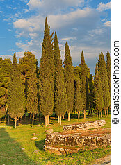 Cypress trees landscape ancient ruin neadow nature