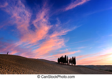 Cypress trees on the field in Tuscany, Italy at sunset.