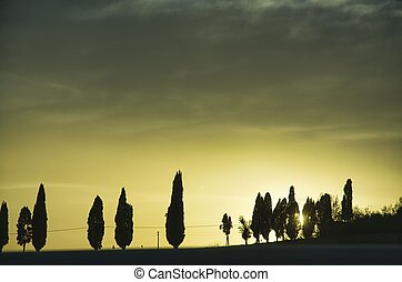 cypress trees photographed at sunset