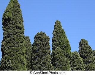 cypress trees in a churchyard