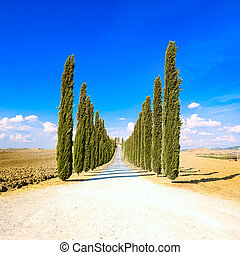 Cypress Trees rows and a white road rural landscape in val d Orcia land near Siena, Tuscany, Italy, Europe.