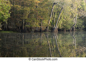 Cypress trees. - Reflections of trees along bayou.