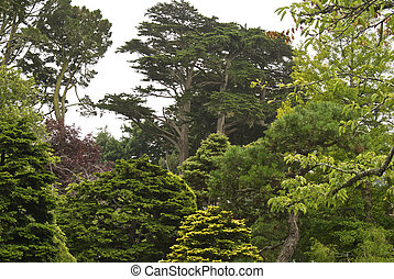 Cypress Trees top the forest canopy