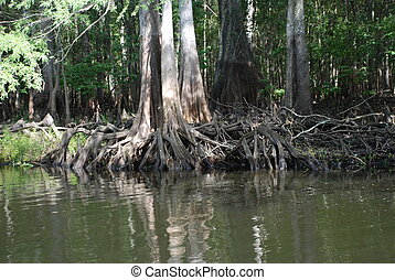 Trees on the banks of the Withlacoochee River, Dunnellen, Florida
